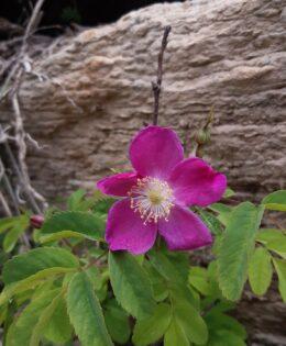 Biodiversiteti në Bjeshkët e Nemuna